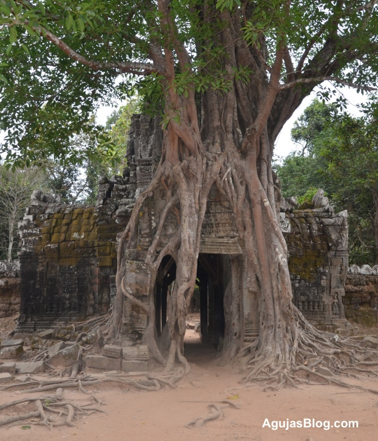 The forest continues to swallow up the temple.