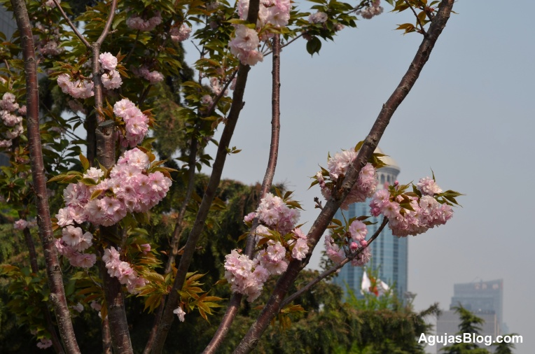 View in Chaoyang District, Beijing, April 2013