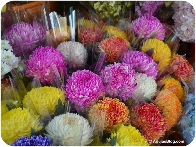 Mong Kok Flower Market 5