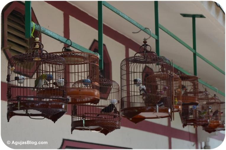 Yuen Po Street Bird Garden 1