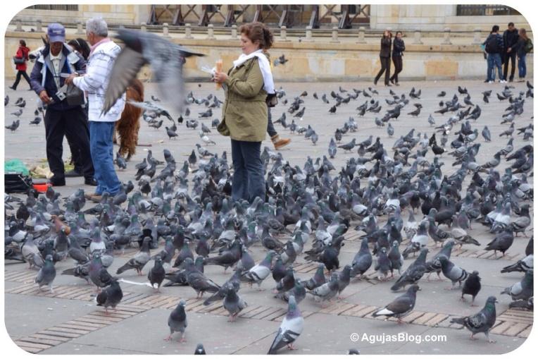 Birds at Plaza de Bolívar