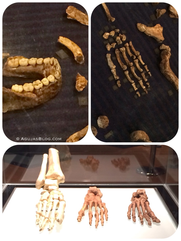 Cradle of Humankind Homo Naledi Fossils 2