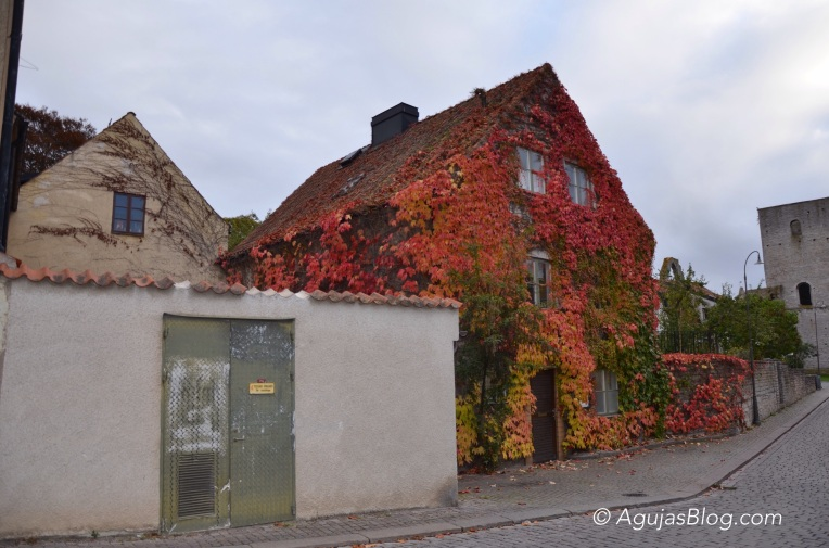 Fall in Visby 1