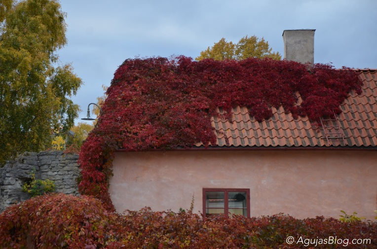 Fall in Visby 2