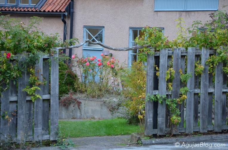 Visby Rose Garden