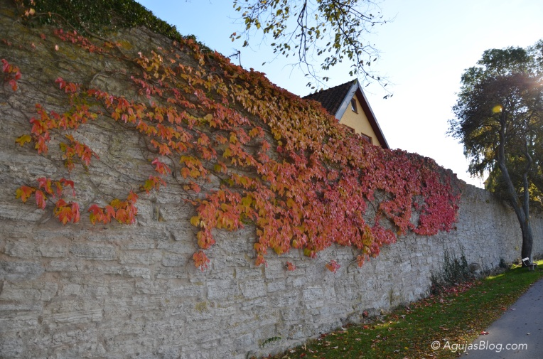 Visby's Medieval Wall with Foliage