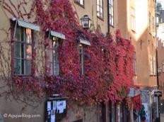 Fall in glorious reds along Köpmanbrinken.